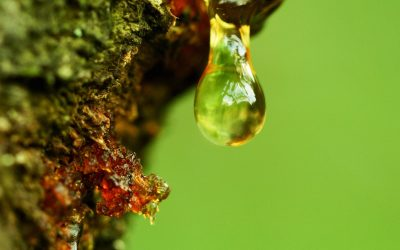 How to Remove Tree Sap from Your Car's Exterior